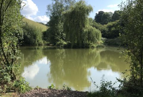 Pines Pond